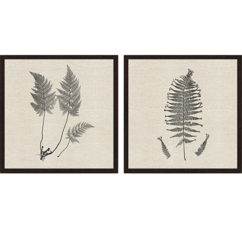 Ferns I Artwork